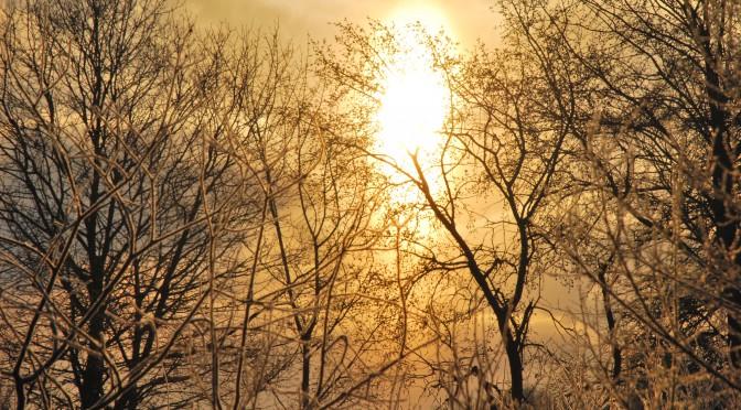 Winterbild mit Sonne